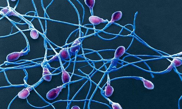 Подвижность спермиев