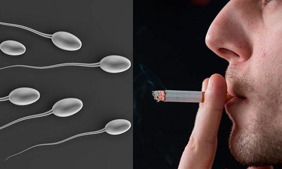 Влияние курения на сперматозоиды